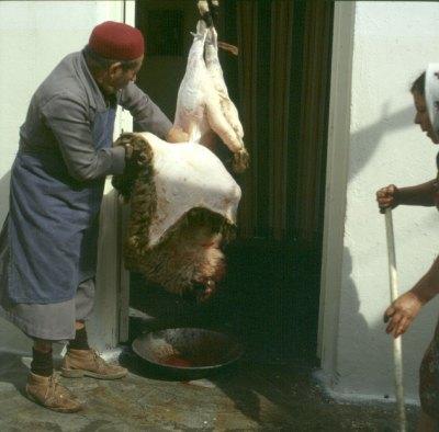 tunesien-Korba Hammelfest Häuten 1979