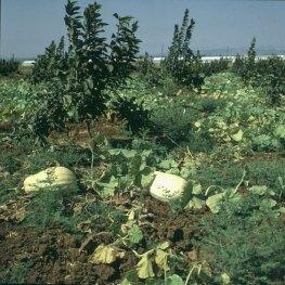 Haifa-Kibbuz