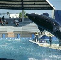 Miami-Seaquarium-Show-