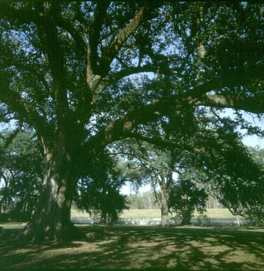 Mississippi-Baum mit Regenpflanzen