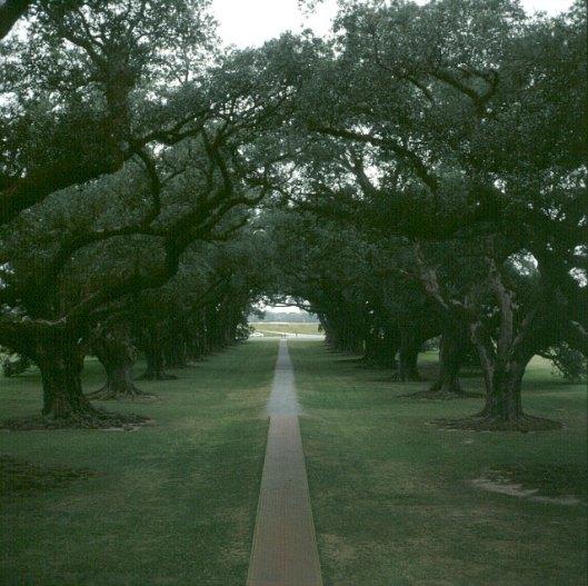 Mississippi-Oak-Alley