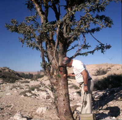 oman-salalah-weihbaum-irvin 1989