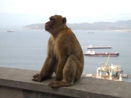 Traumschiff-tanger-gibraltar-affen-2012