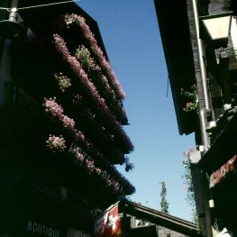 zermatt-blumen-balkone
