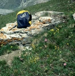 zermatt-wiese-rucksack