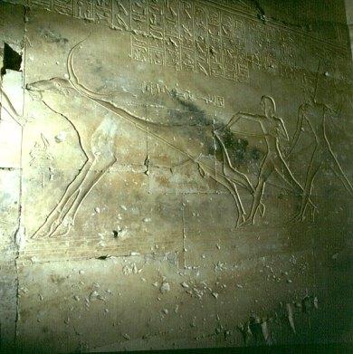 Dendera-Ramses-Stierjagd