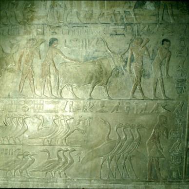 Gizeh-Sakkara-Grab des Ti-Landwirtschaft