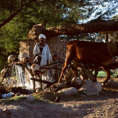 Ägypten Wasserrad mit Tonkrügen