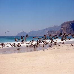 Oman Salalah Strandszene 1989