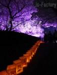 福岡城さくらまつり 福岡城趾の桜のライトアップ 2014