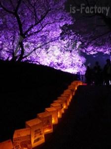福岡城さくらまつり2014-1