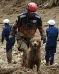【画像特集】広島土砂災害で頑張る災害救助犬たち