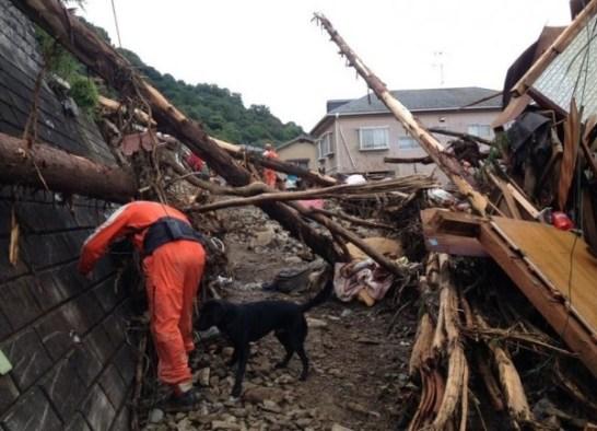 2014.8.20広島土砂災害災害救助犬