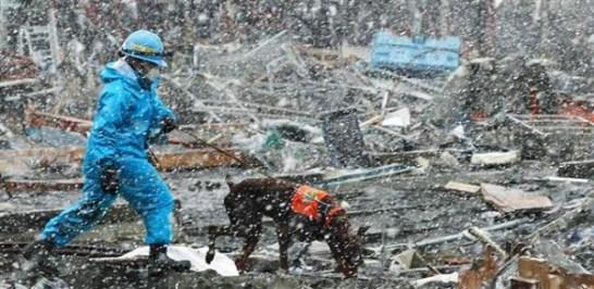 3.11災害救助犬