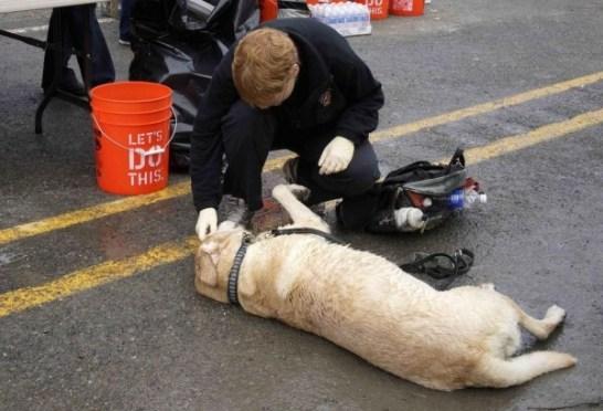 災害救助犬
