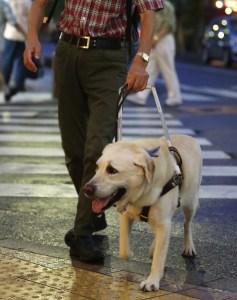 盲導犬オスカー