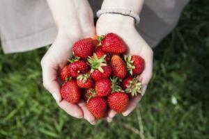 手のひらいっぱいの苺