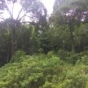 Francis landong - Putus Atau Terus (feat. Judika)width=