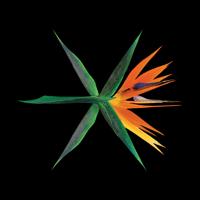 Ko Ko Bop (Chinese Version) EXO