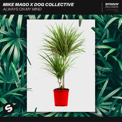 Always On My Mind - Mike Mago & Dog Collective mp3 download
