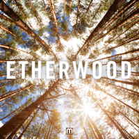Begin By Letting Go Etherwood