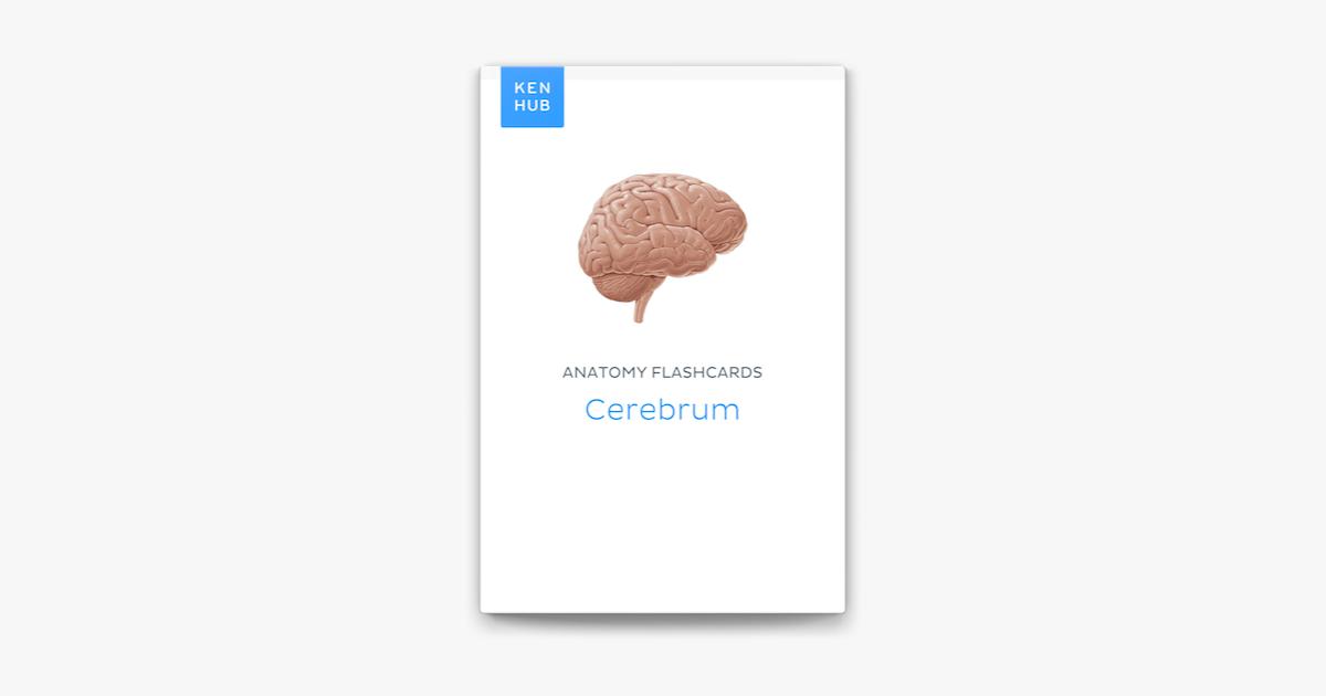 Anatomy flashcards: Cerebrum on Apple Books