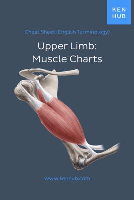 Upper Limb: Muscle Charts - Kenhub