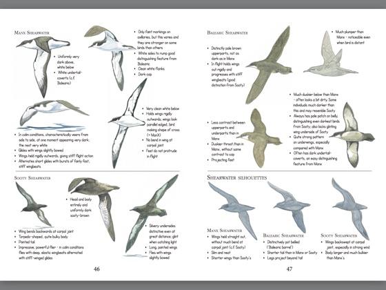 Birds: ID Insights on Apple Books