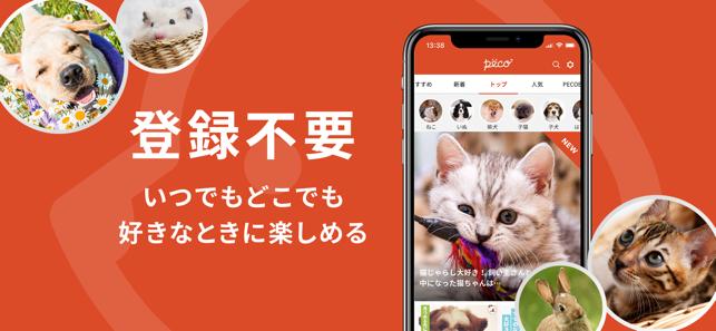 PECO(ペコ):可愛いどうぶつ動画・迷子サポートサービス Screenshot