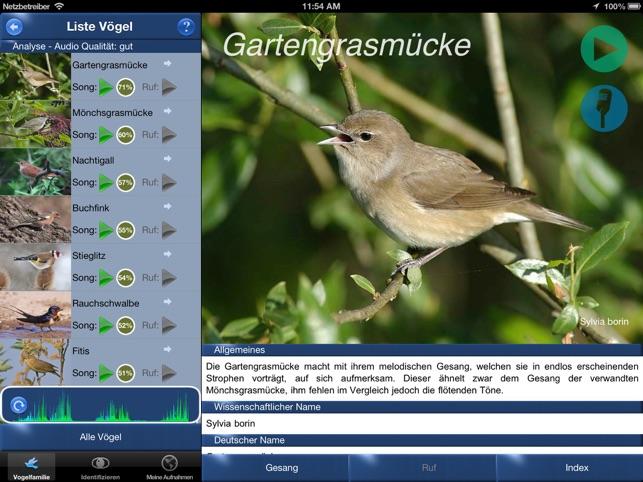Vogel Bild Heimische Vogel Nachtigall