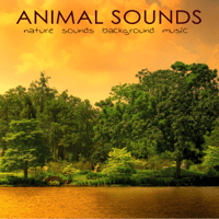 Zen Music (Yoga Music) Nature Sounds White Noise Sound Effects MP3