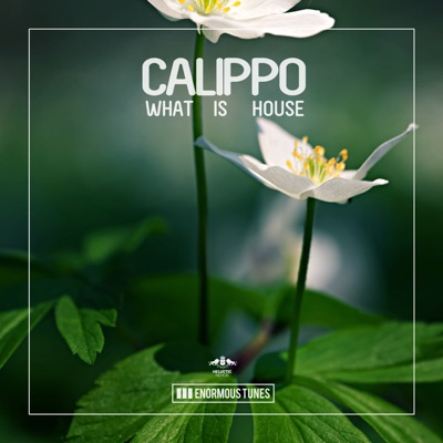 What Is House (Original Club Mix) - Calippo mp3 download