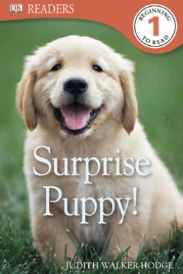 DK Readers L1: Surprise Puppy (Enhanced Edition) - Judith Walker-Hodge
