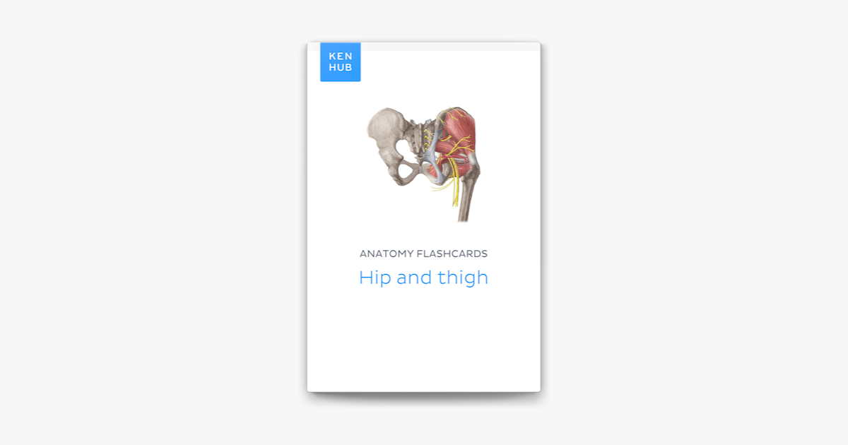 ‎Anatomy flashcards: Hip and thigh on Apple Books