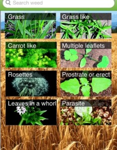 Iphone screenshots also weed id the ute guide on app store rh itunesle