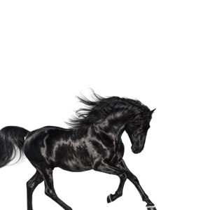 Old Town Road - Old Town Road mp3 download