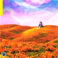 California Poppy - Rexx Life Raj