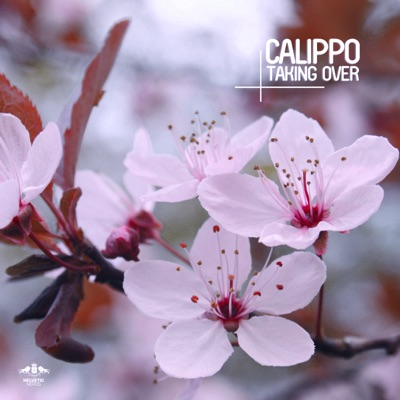 Need A Friend - Calippo mp3 download
