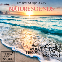 Soothing Ocean Waves On Hawaii Life Sounds Nature