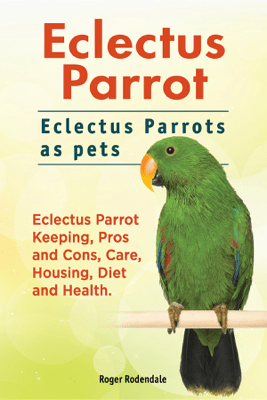 Eclectus Parrot. Eclectus Parrots as pets. Eclectus Parrot Keeping, Pros and Cons, Care, Housing, Diet and Health. - Roger Rodendale