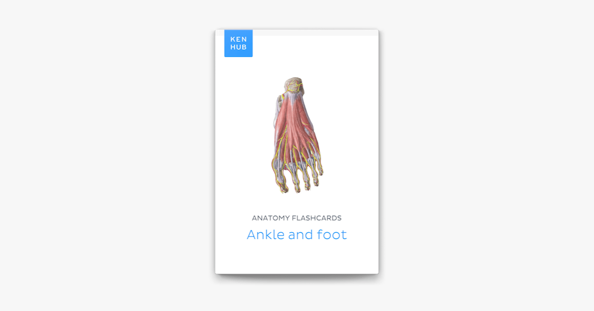 Anatomy flashcards: Ankle and foot on Apple Books
