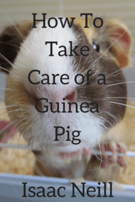 How to Take Care of a Guinea Pig - Isaac Neill