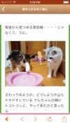 日刊ねこ新聞 - 猫ブログ&ネコ動画アプリスクリーンショット2