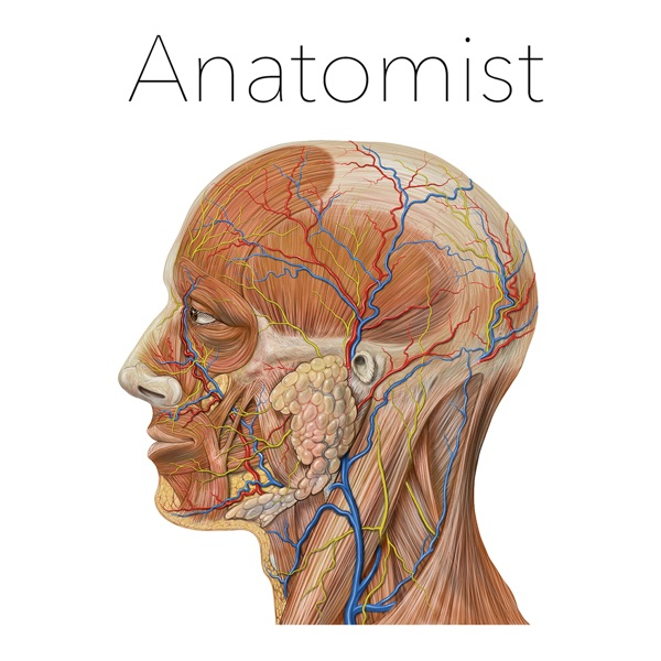Anatomist – Anatomy Quiz Game