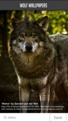 Wolf Wallpaper on the App Store