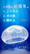 癒しのクラゲ育成ゲーム(無料)スクリーンショット2