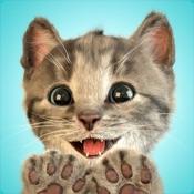 Kleines Kätzchen - meine Lieblingskatze