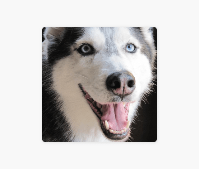 Mishkas Song Single By Mishka The Talking Husky On Itunes