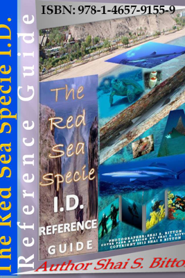 The Red Sea Specie I.D. Reference Guide - Shai S Bitton