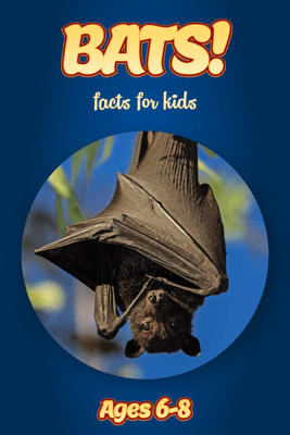 Facts About Bats For Kids 6-8 - Cindy Bowdoin